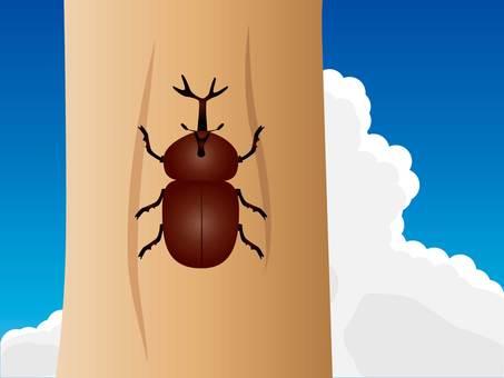 甲蟲和積雨雲的插圖