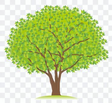 1 개의 녹색의 나무