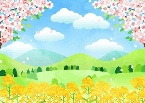 水彩風葉桜と菜の花の里山ヨコ