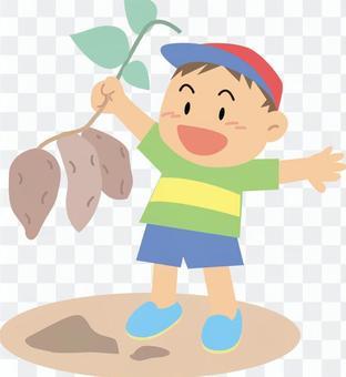 一個男孩挖土豆