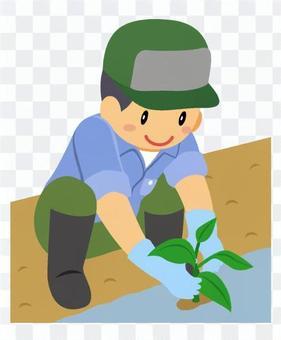 農業-苗植え