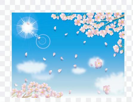 櫻花_藍天