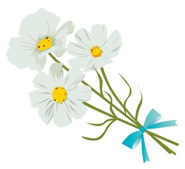 白色的波斯菊花束