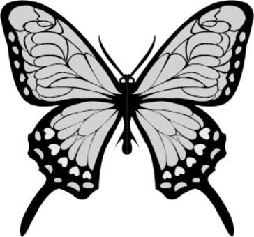 黑色和白色的蝴蝶