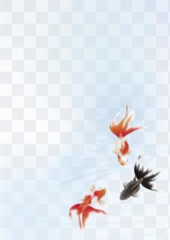 金魚和Kaido水_垂直大小