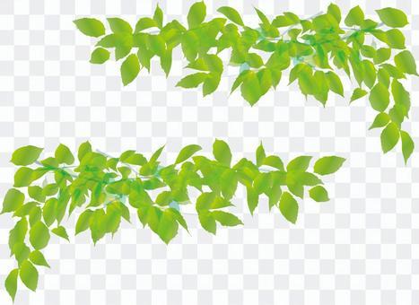 葉綠色幀框架裝飾框架新鮮綠色年輕葉子