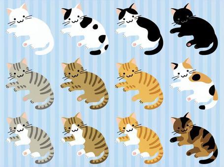 各種貓的頭髮顏色