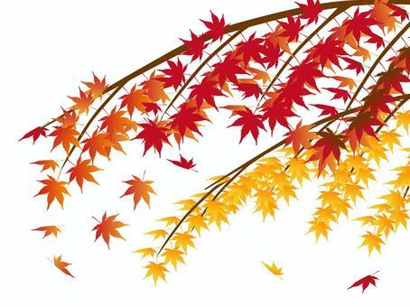 日本風格的材料秋天的楓葉楓葉