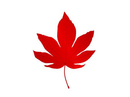 紅楓的插圖