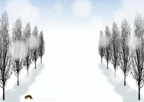 Poplar row of trees street tree winter landscape 1