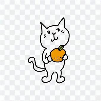 白色的貓抱著一個橘子