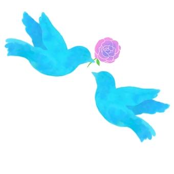 兩朵玫瑰藍鳥