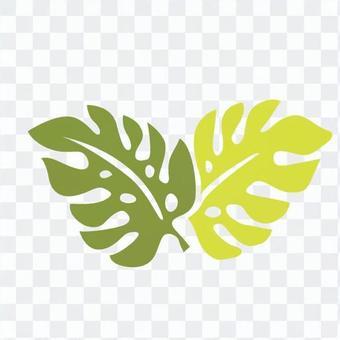 ハワイアン植物12