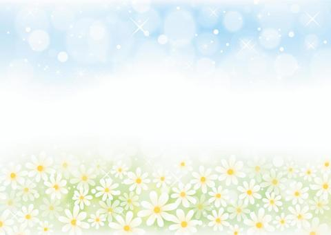 花田和天空風光01