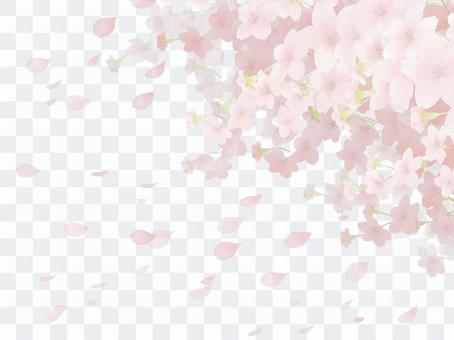 Cherry blossom background 8