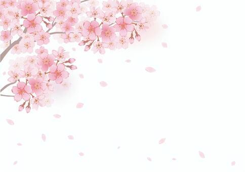 櫻花框架21