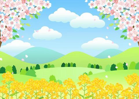 葉桜と菜の花の里山ヨコ
