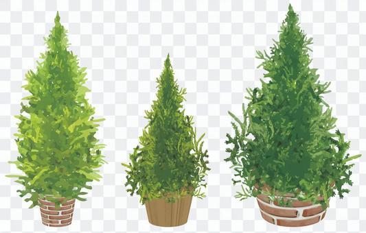 針葉樹盆栽的植物