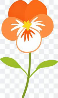 Wanderful cute orange pansy