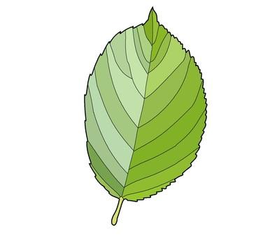 """잎 """"벚꽃"""""""