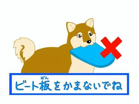 柴犬嚼在踢腳板上