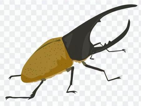 大力士甲蟲