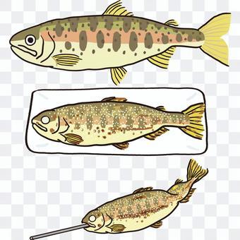 鹽烤山梅鱒魚