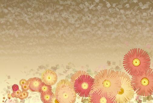 小菊背景3