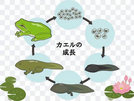 樹蛙生長與蓮花字母