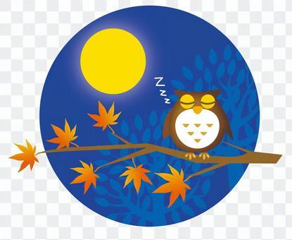 秋天的夜貓子