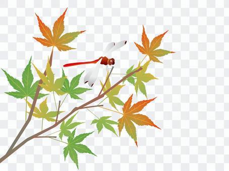 彩色的楓樹和紅蜻蜓