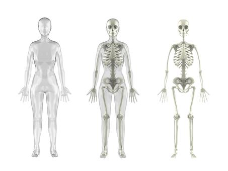 Human skeletal woman