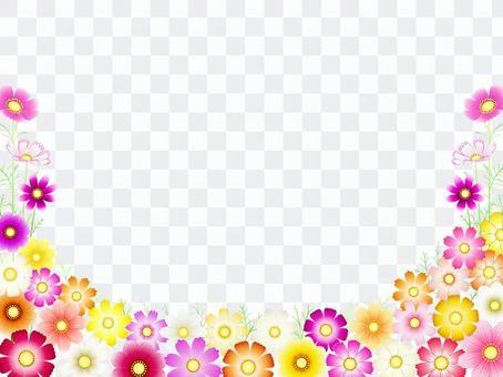 秋向け・コスモス背景・花畑12