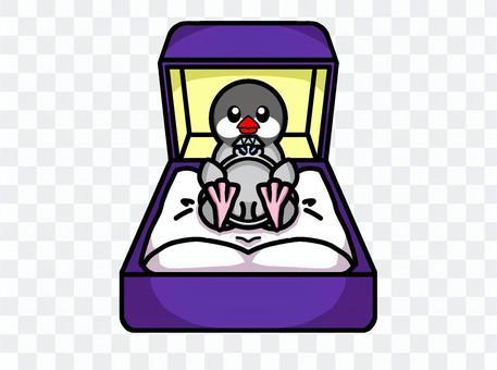 Java麻雀求婚戒指