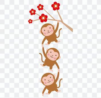 猴子在梅樹上