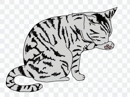 Mackerel tabby cat grooming