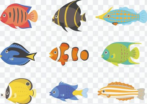 各種熱帶魚
