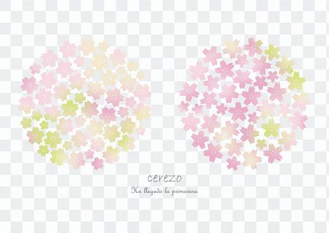 櫻花【漸變】