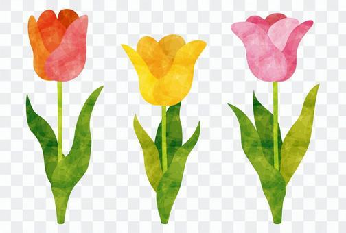 Spring / Tulip