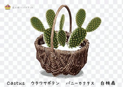 花綠色籃子內U仙人掌B