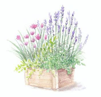 繪製與透明水彩草藥水果種植