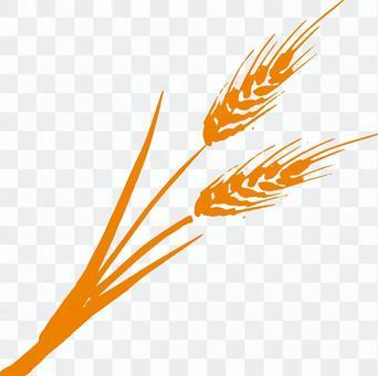 小麥a_ orange_cs