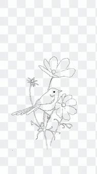 花(波斯菊)和鳥