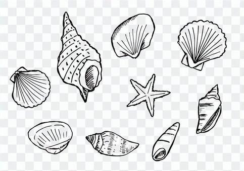 Seashell illustration set (black line)