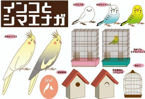 インコ、シマエナガ(小鳥いろいろ)