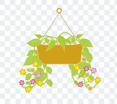 Potted plant (hanging) colorful