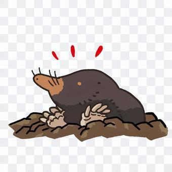 從土壤出來的鼠