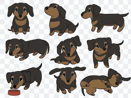 臘腸犬(黑色和棕色)姿勢套