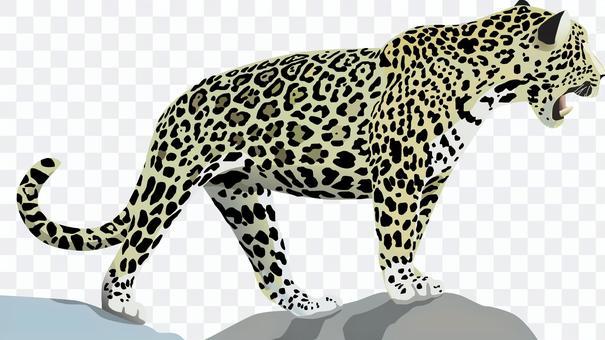 Leopard cheetah jaguar