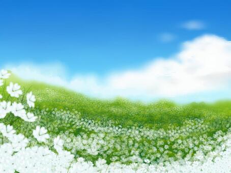 白色的花園